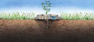 Controle de matocompetição, controle de mato brachiaria