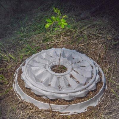 Comprar Nucleário produto para plantio florestal